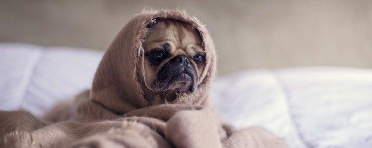 Är det möjligt att göra husdjur till enskild egendom i äktenskapsförord?